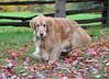 DSC_0640 Skylar Oct 7 2012