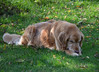 DSC_0365 Skylar Oct 5 2012