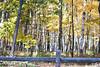 7769 Browns Hill Development Oct 13 2010